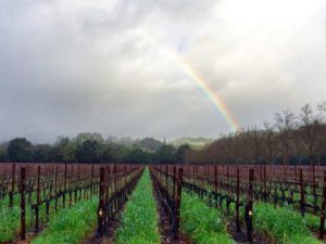 Napa Valley wines in St. Helena, CA