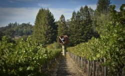 WArming fan at Anderson's Conn Valley Vineyard